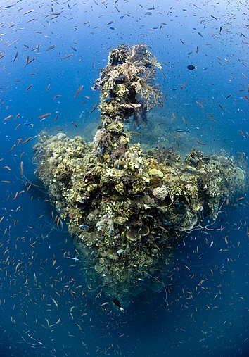 DiveQuest / The Ultimate In Diving Holidays / Articles