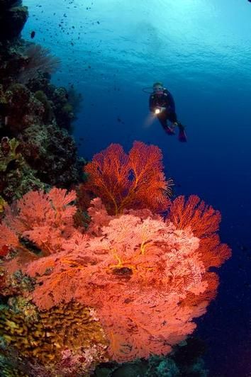 Australia Diving Holidays And Liveaboards