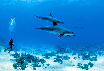 french polynesia diving holidays and liveaboards