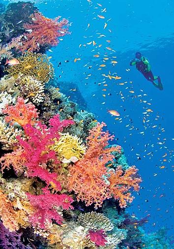 Bali Diving Holidays And Liveaboards