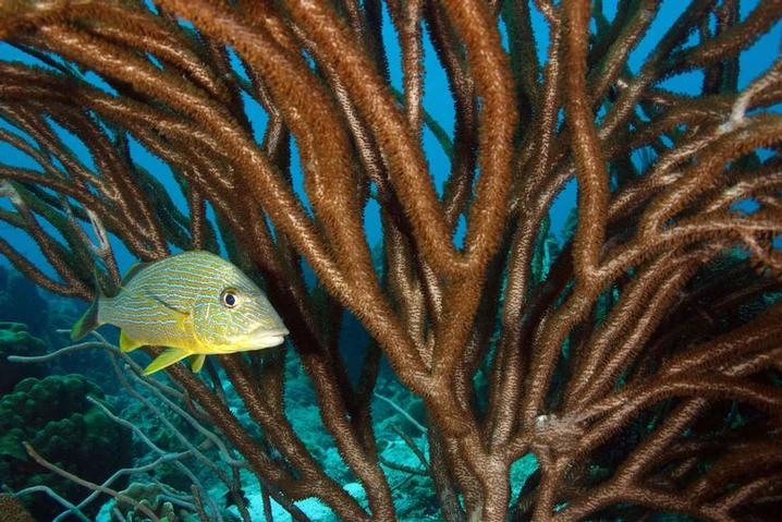 BONAIRE - One of the best value for money diving escapes in the Caribbean (Image by Buddy Dive)